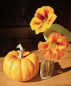 pumpkin & nasturtium